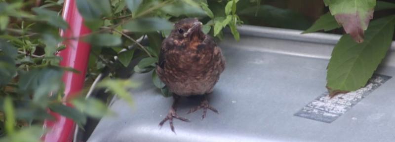 Ein Vogel im Garten. Citizen Science trägt dazu bei, Bestände zu zählen.